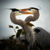 Bird Images by J. McBroom