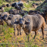 A Photographic African Journey with Magnum Excursions