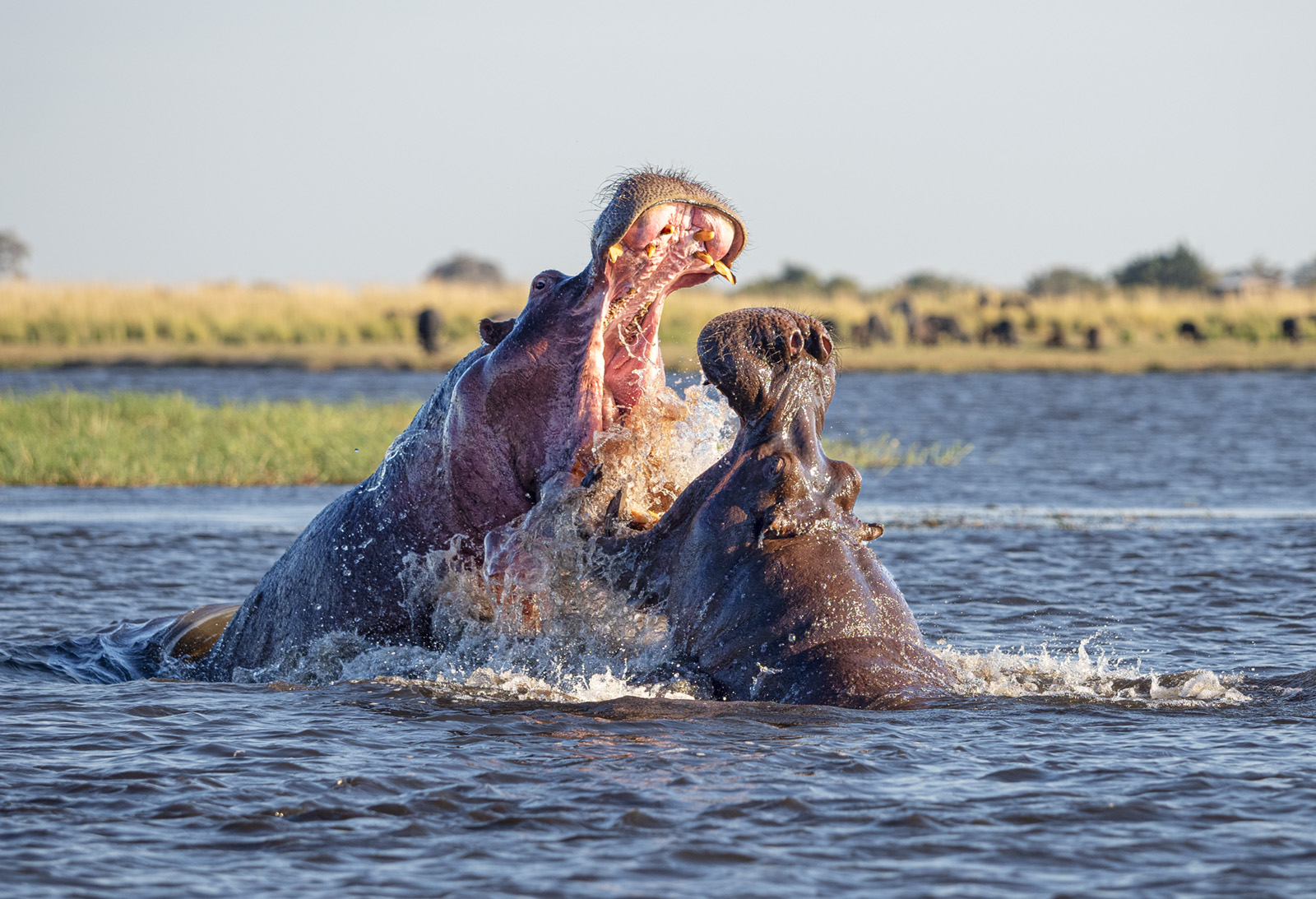2021 Chobe National Park, Botswana – Land and Water May 29 – June 4 – SOLD OUT