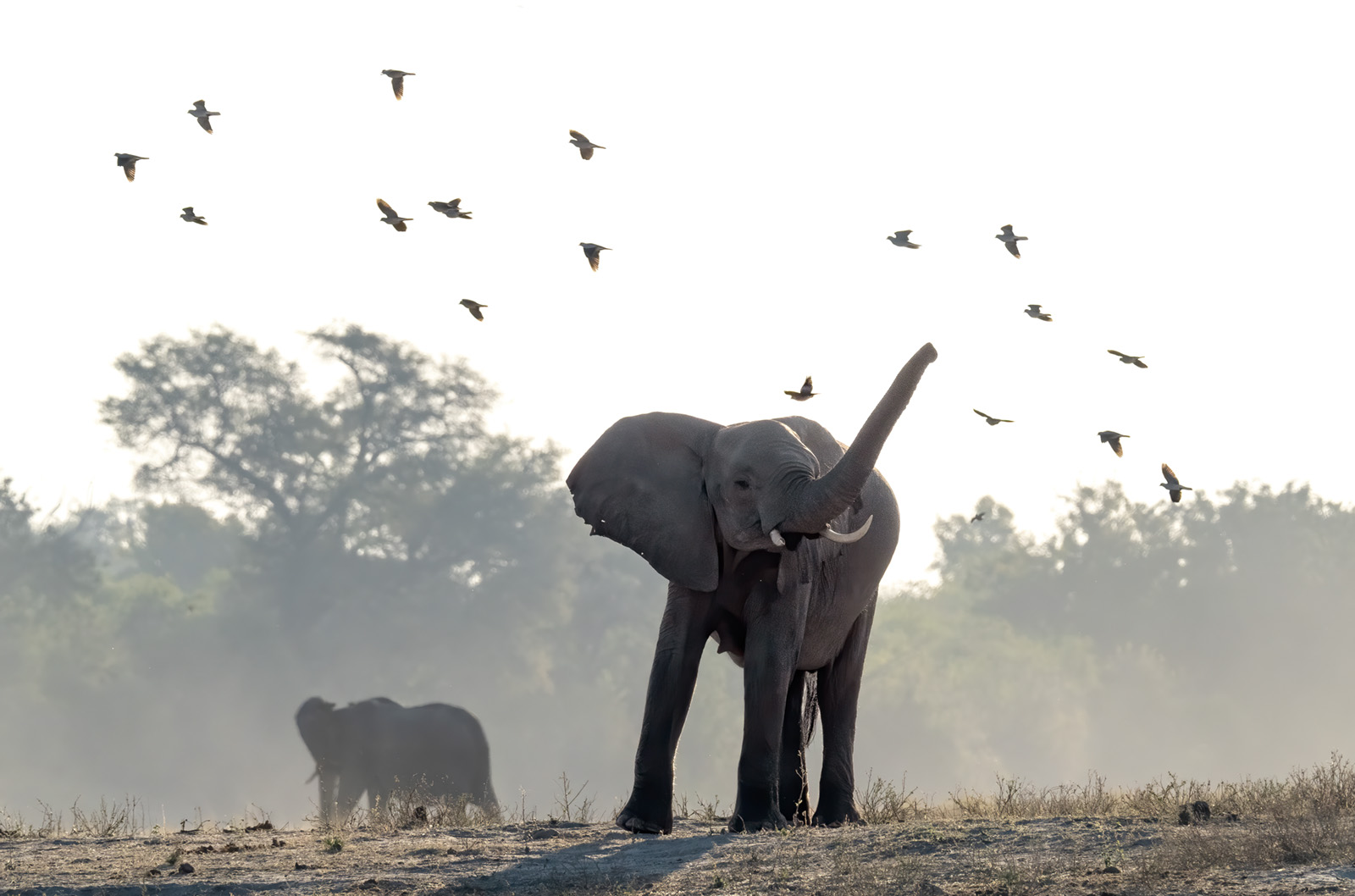 SOLD OUT – 2020 Botswana's Okavango Delta, Chobe River and Namibia's Zambezi River November 2 – 13, 2020