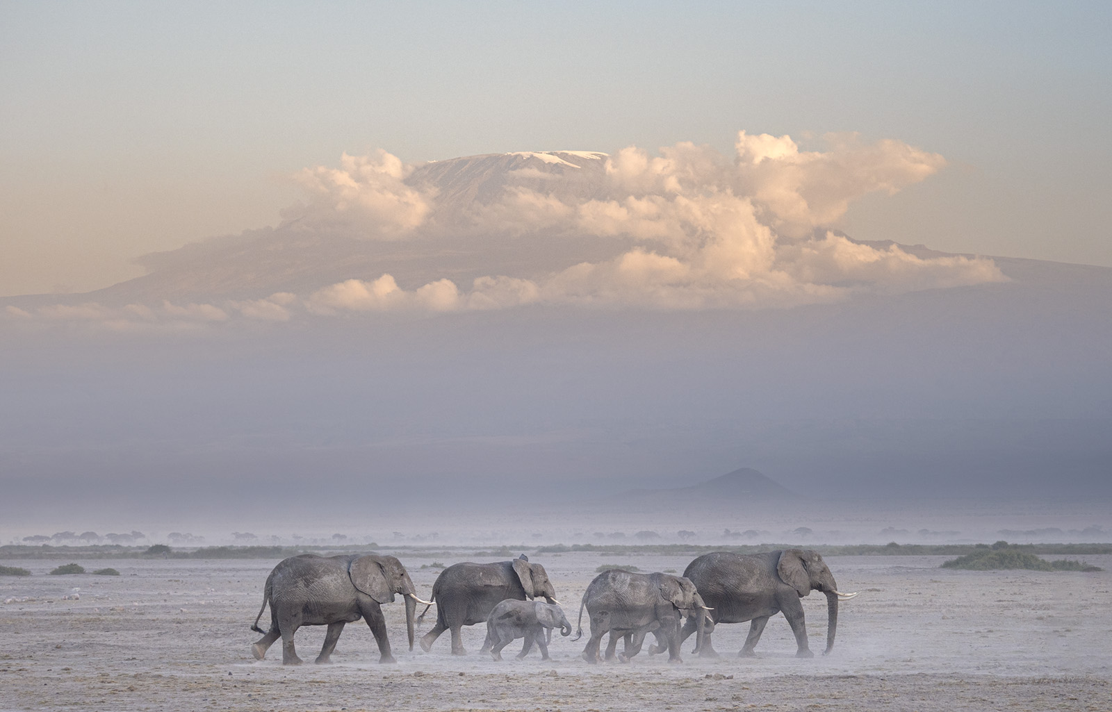 2020 Mara Extension: Amboseli's Elephants and Views of Mt. Kilimanjaro