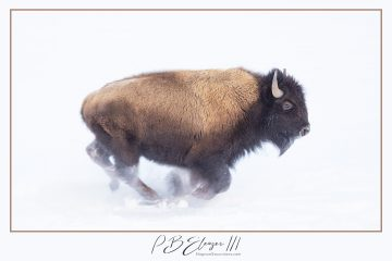 SOLD OUT – 2020 Winter in Yellowstone Photo Workshop – February 1-8, 2020