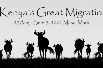 SEPT. 2021 Kenya's Great Migration in the Masai Mara