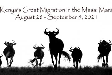 AUG. – SEPT. 2021 Kenya's Great Migration in the Masai Mara